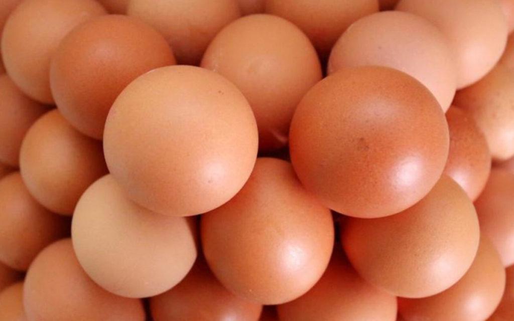 NOVI TRAVNIK / Nakon završenog fakulteta pokrenuli farmu bio jaja