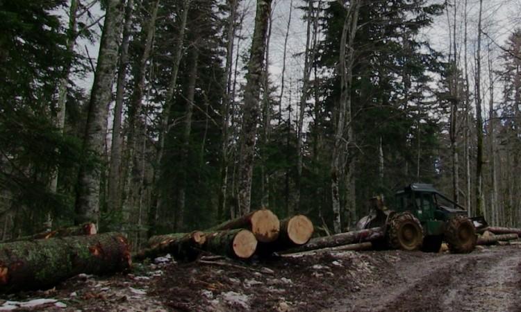U FBiH smanjenje i proizvodnje i prodaje šumskih sortimenata