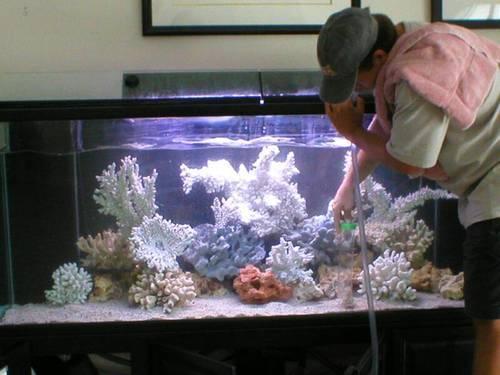 posao održavanja i čišćenja akvarijuma